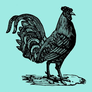 Chicken - black heat transfer on a blue background