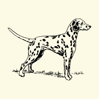 Dalmatian dog - black heat transfer on a natural background