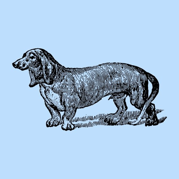 Dog hand drawing - black heat transfer on a blue background