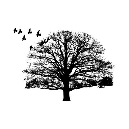 Nature. Tree and birds - Black heat transfer on a white background